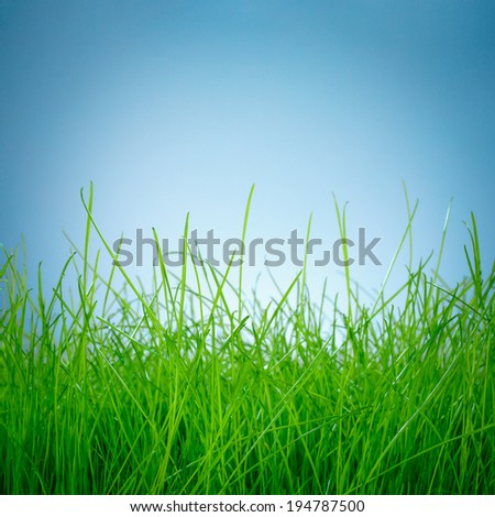 Spring green grass on blue background - stock photo
