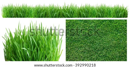 Spring green grass. Top view, side, and panoramic. On a white background. - stock photo