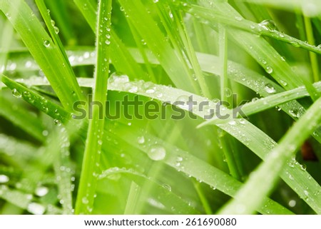 Spring green grass with drops of water - stock photo