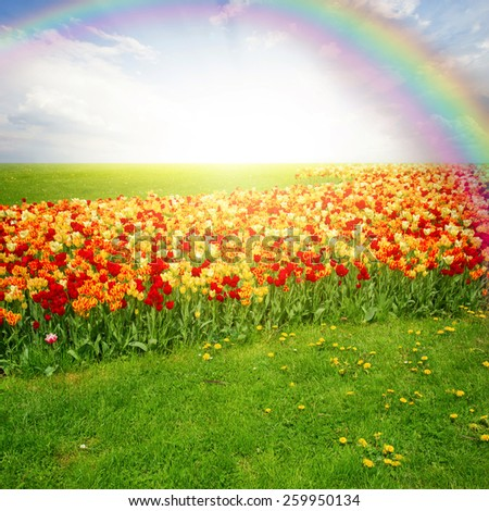 spring green lawn with flowersand rainbow  in sunny day - stock photo