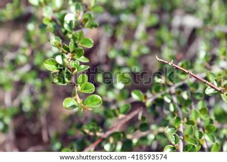 Spring green lush foliage - stock photo