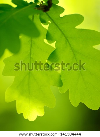 Spring Green Oak Leaves Over Blurred Bright Background - stock photo