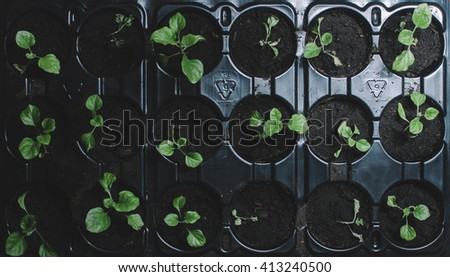 Spring green plants in pots on home table - stock photo