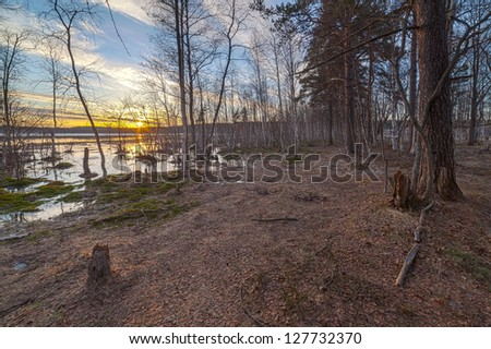 Spring high water in wood at lake.  landscape
