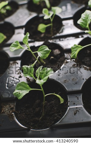 Spring home seedlings in the box - stock photo
