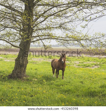 Spring . Horse on pasture