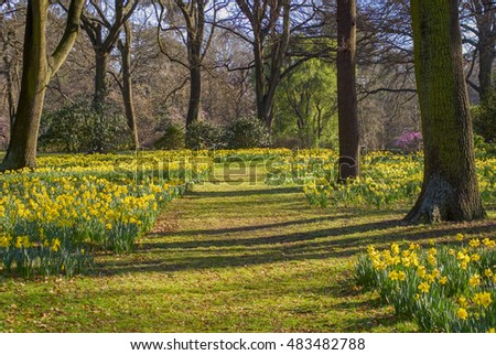 Spring in Christchurch, New Zealand, means thousands of daffodils in Hagley Park.
