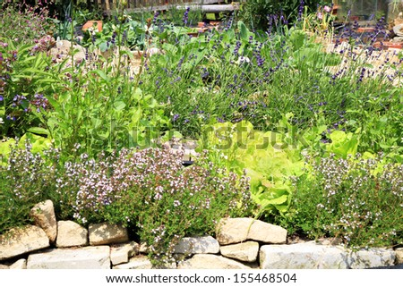 Spring in formal eco home garden. Organic cultivation of herbs and vegetables. - stock photo