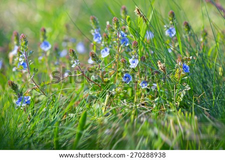 Spring in meadow - stock photo