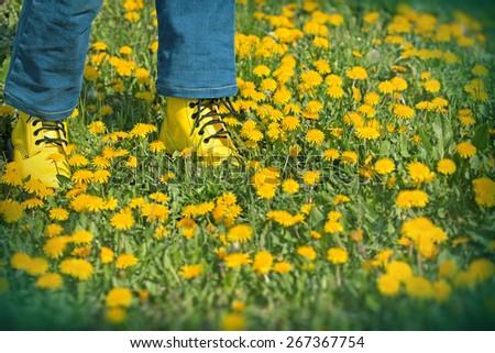 Spring in meadow - Spring walks on meadow full of flowers - stock photo