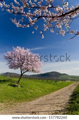spring in palatinate, germany