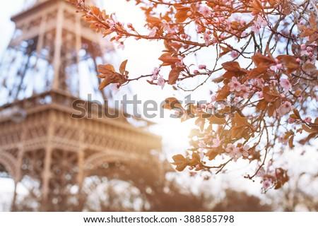 spring in Paris - stock photo