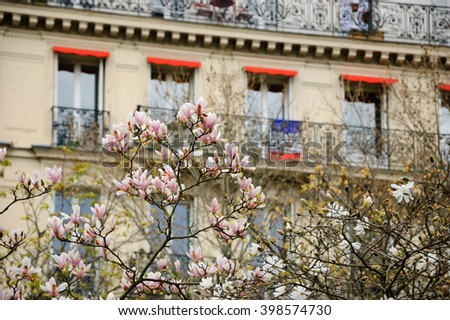 Spring in Paris. Blossoming Magnolia tree and typical Parisian building with French flag hanging out from balcony. - stock photo