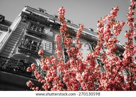 Spring in Paris. Typical Parisian building and blossoming pink tree. Retro aged photo. - stock photo