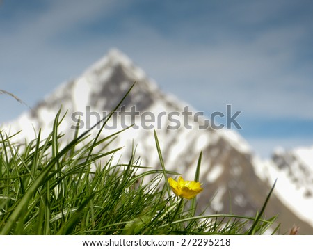 Spring in the Alps as a background image - stock photo
