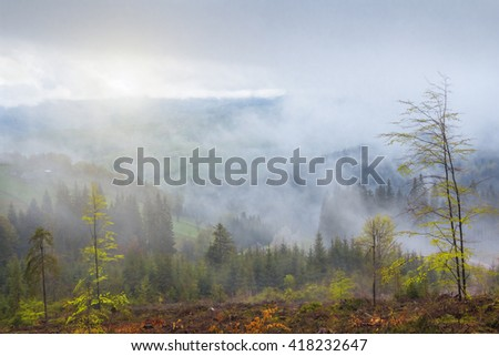 spring in the carpathians, a foggy day in the forest, a clearing with young trees and a panoramic meditative mountain view, natural seasonal background