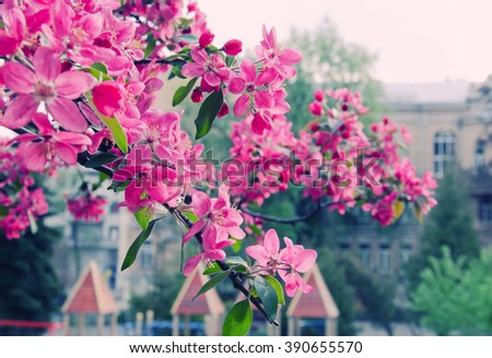 Spring in the city (bright pink sakura flowers against the background of buildings, shallow DOF), retro style - stock photo