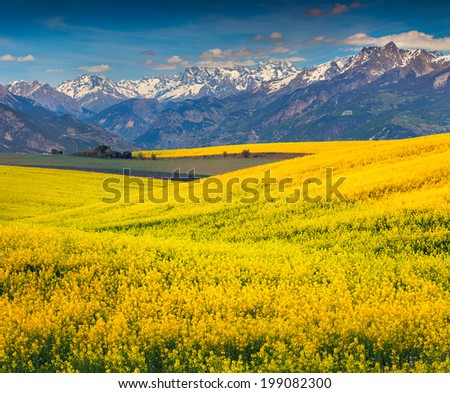 Spring in the foothills. Blooming field of yellow flowers - stock photo