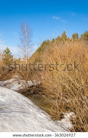 Spring in the forest, the grass withered, the last snow, warm spring day, desktop wallpapers. This photo good design solution.