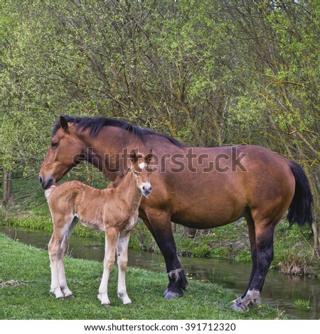 Spring in the village. Horses on pasture - stock photo