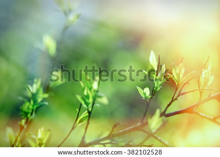 Spring is coming - fresh spring leaves - stock photo