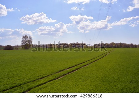 spring landscape - field with young wheat and tractor tracks - stock photo