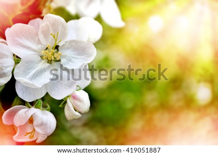 spring landscape. Flowering apple tree. Spring flowering garden.