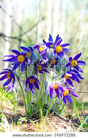 Spring flowers pictures and names beautiful design ideas spring spring landscape flowers growing in the wild spring flower pulsatilla common names include mightylinksfo