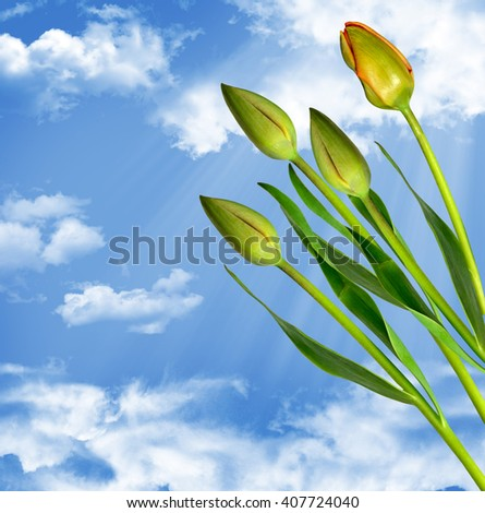 Spring landscape. Flowers tulips on a background of blue sky with clouds.