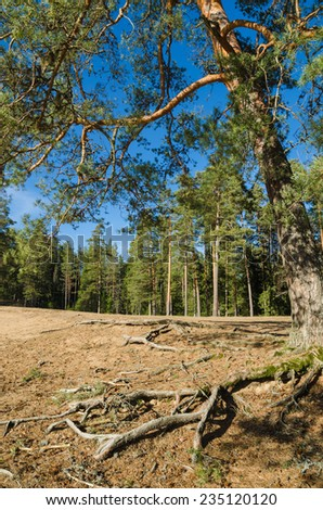 Spring landscape in a Baltic wood - stock photo