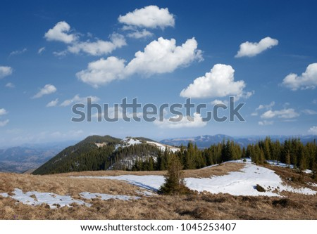 Spring landscape in mountains. Fir forest on the slopes. Sunny weather with blue sky and cumulus clouds. Carpathians, Ukraine, Europe