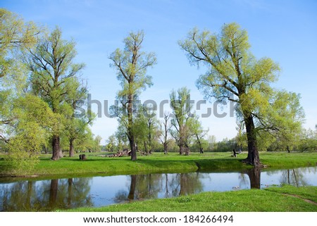 spring landscape in the flood tide in an oak grove on a sunny day
