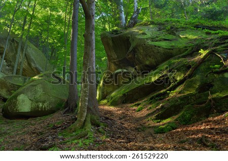 Spring landscape in the forest. Moss on rocks and tree roots. Beauty in nature - stock photo