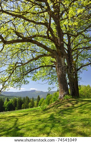 Spring landscape in the national park Sumava - Czech Republic - stock photo