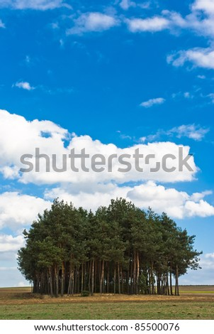 spring landscape of young grey forest with green trees