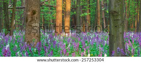 Spring landscape. Primrose in the forest - stock photo