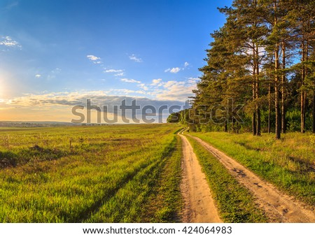 Spring landscape, the road between the pine forest and field with fresh herbs