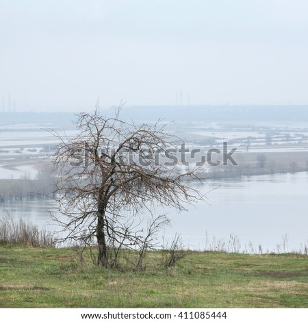 spring landscape tree without leaves in a park on the banks of the river  - stock photo