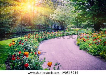 Spring landscape with colorful tulips. Keukenhof garden, Netherlands  - stock photo