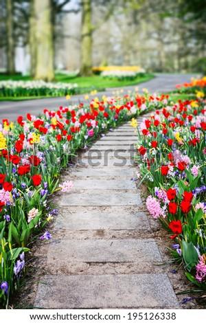 Spring landscape with colorful tulips. Keukenhof garden, Netherlands - stock photo