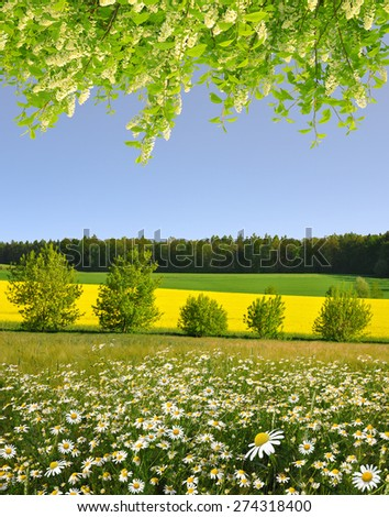 Spring landscape with field of marguerites and flowering branch tree - stock photo