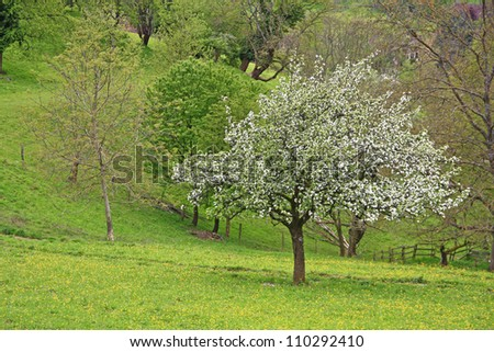 Spring landscape with flowering fruit tree in the Black Forest, Baden-Wurttemberg, Germany