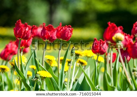 Spring Landscape With Flowers Tulip Beautiful Bouquet Of Tulips Colorful