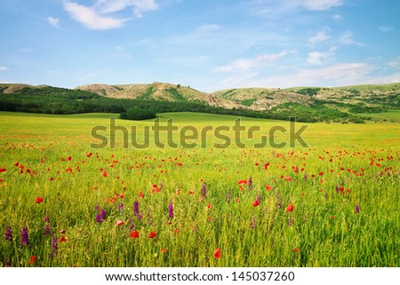 Spring landscape with meadow and flowers. Composition of nature. - stock photo