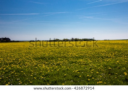 Spring landscape with trees on dandelions field. - stock photo