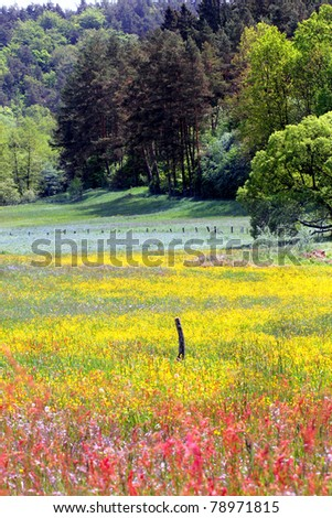 Spring landscape with wildflowers in the valley - stock photo