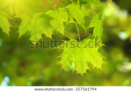 Spring leaf. Composition of nature. - stock photo