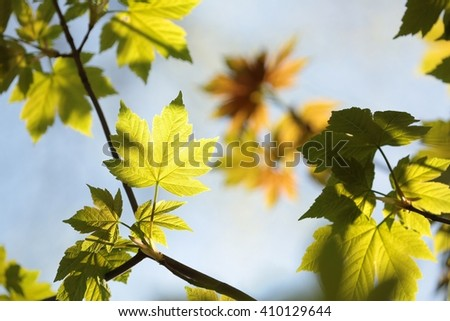 Spring leaves against the sky. - stock photo