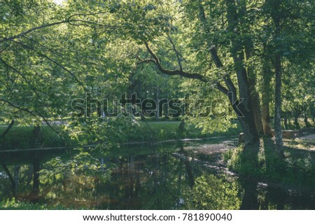 spring leaves lush with blur background. natural environmental detail view in latvia - vintage film look
