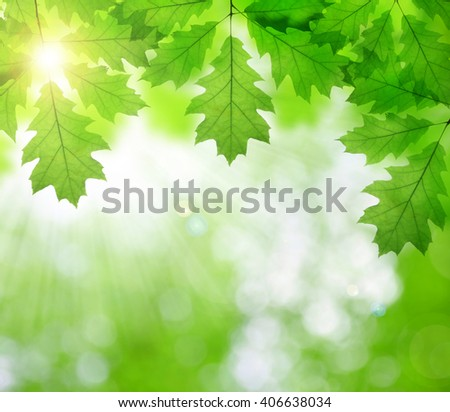 Spring leaves of oak tree on green natural background. - stock photo